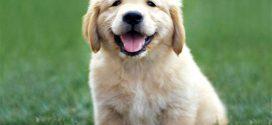Kolayca  Bulabileceğiniz Köpek Malzemeleri İle Köpeklerinizi Eksik Bırakmayın!